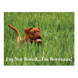 I'm Not Bored...I'm Bordeaux! Dog Postcard