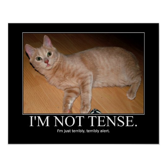 I'm not tense cat artwork poster