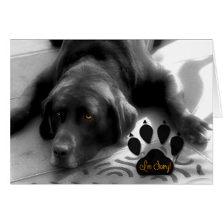 I'm Sorry! Funny Verse with Cute Labrador Dog Card