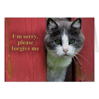 I'm Sorry, with Cute Gray and White Cat Card