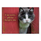 I'm Sorry, with Cute Grey and White Cat Card