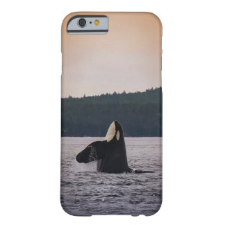 I'm spying on you wild Jpod Killer Whale iPhone ca Barely There iPhone 6 Case