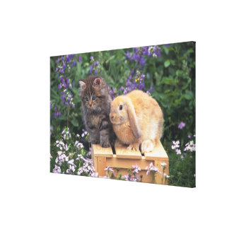Image of a Kitten and a Lop Ear Rabbit Standing Canvas Print