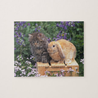 Image of a Kitten and a Lop Ear Rabbit Standing Jigsaw Puzzle