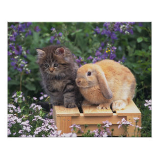 Image of a Kitten and a Lop Ear Rabbit Standing Poster