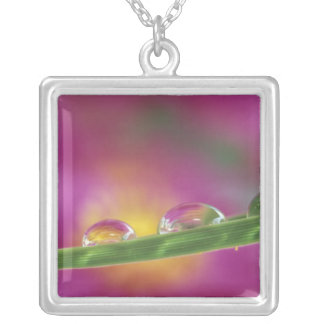 Image of asters formed in water droplets silver plated necklace
