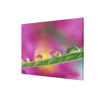 Image of asters formed in water droplets stretched canvas print
