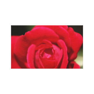 Image of Single Rose On Canvas Canvas Prints