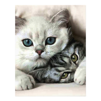 image of two cats 21.5 cm x 28 cm flyer