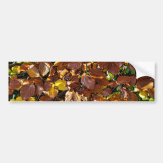 Images of Autumn Bumper Sticker