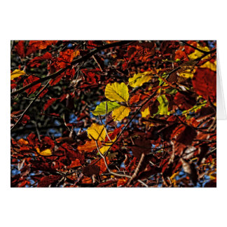 Images of Autumn Greeting Card