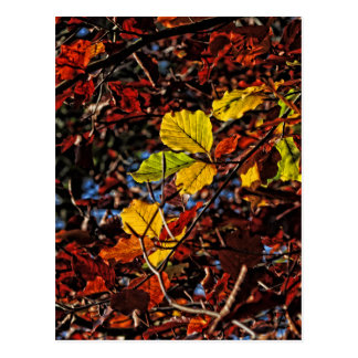 Images of Autumn Postcard