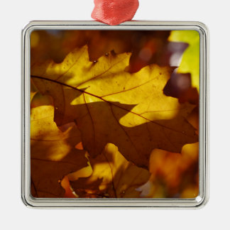 Images of Autumn Silver-Colored Square Decoration