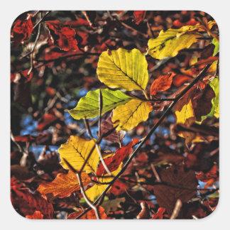 Images of Autumn Square Sticker
