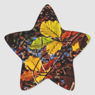 Images of Autumn Star Sticker