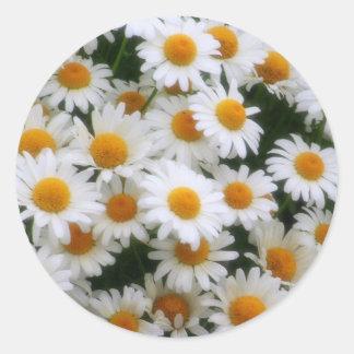 IMG_0066  Daisy Lovers Classic Round Sticker