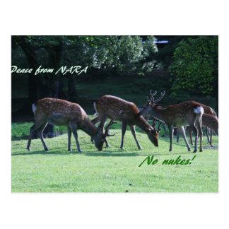 IMG_1699 nara Post Card