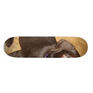 Img_2504 Skateboard