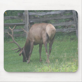 IMG_4877 MOUSE PAD