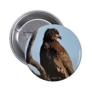 Immature Bald Eagle Button