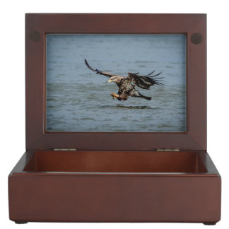 Immature Bald Eagle diving for a fish Keepsake Box