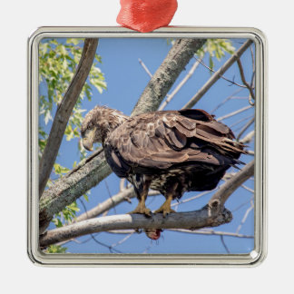 Immature Bald Eagle with a Catfish Silver-Colored Square Decoration