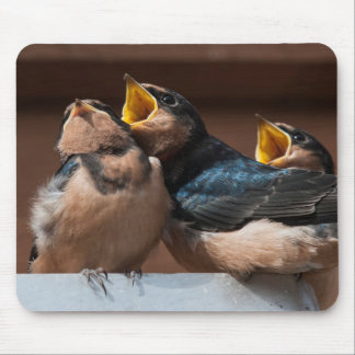 Immature Barn Swallow (Hirundo Rustica) Mouse Mat