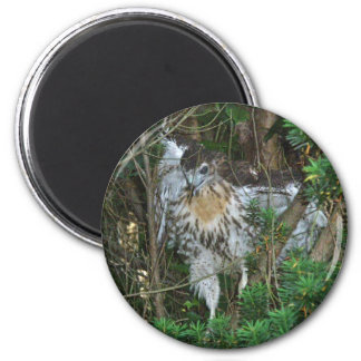 Immature Red Tailed Hawk Coordinating Items 6 Cm Round Magnet