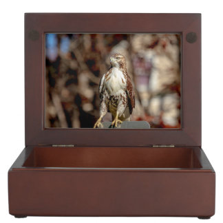 Immature Red Tailed Hawk Memory Boxes