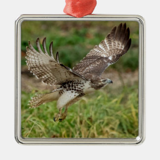 Immature Red Tailed Hawk Silver-Colored Square Decoration