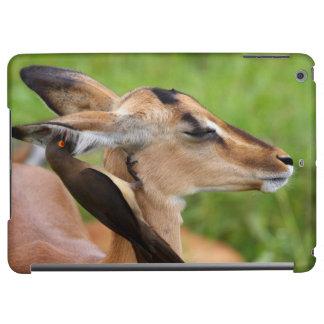 Impala (Aepyceros Malampus) Juvenile iPad Air Cover