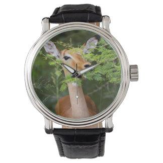 Impala (Aepyceros Malampus) Watch