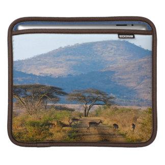 Impala (Aepyceros Melampus), Hluhluwe-Umfolozi iPad Sleeve