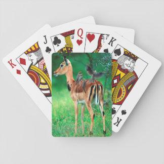 Impala (Aepyceros Melampus) Playing Cards
