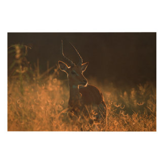 Impala (Aepyceros Melampus) Ram At Dusk Wood Wall Decor