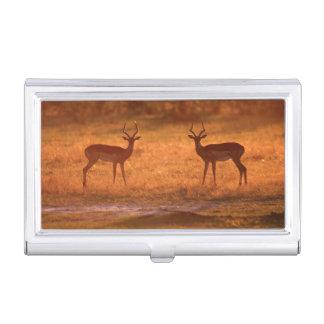 Impala (Aepyceros Melampus) Rams At Sunset Business Card Holder