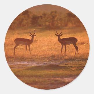 Impala (Aepyceros Melampus) Rams At Sunset Classic Round Sticker