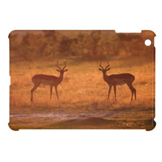 Impala (Aepyceros Melampus) Rams At Sunset iPad Mini Cover