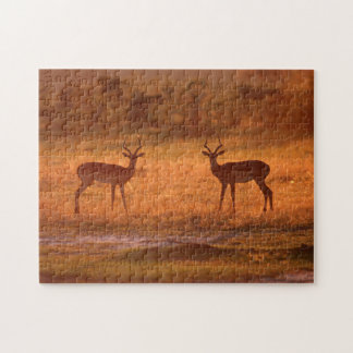Impala (Aepyceros Melampus) Rams At Sunset Jigsaw Puzzle