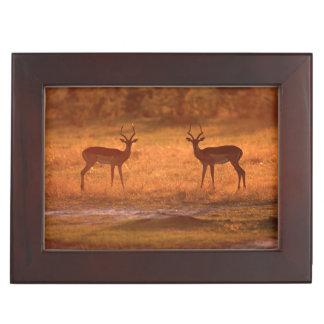 Impala (Aepyceros Melampus) Rams At Sunset Keepsake Box