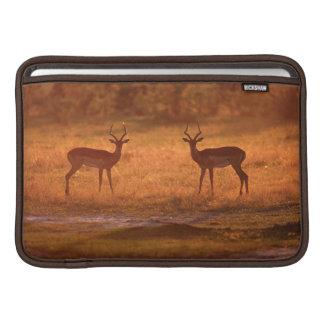 Impala (Aepyceros Melampus) Rams At Sunset MacBook Sleeve