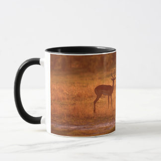Impala (Aepyceros Melampus) Rams At Sunset Mug
