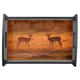 Impala (Aepyceros Melampus) Rams At Sunset Serving Tray