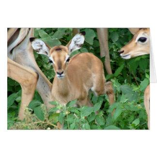 Impala Fawn Card