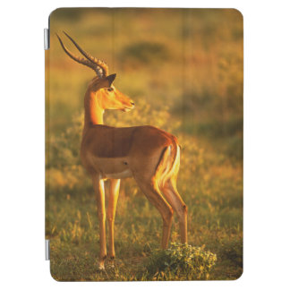 Impala in Golden Light iPad Air Cover
