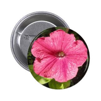 Impatiens Dark Pink Button