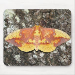 Imperial Moth Mouse Pad