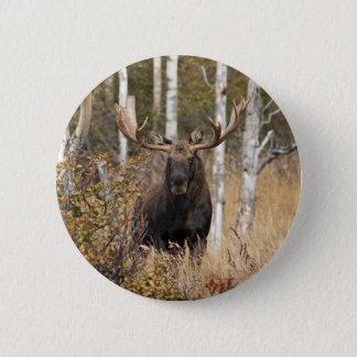 Impressive Bull Moose 6 Cm Round Badge