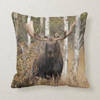 Impressive Bull Moose Cushion