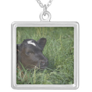 In Chinese zodiac, 2009 is year of ox. Silver Plated Necklace